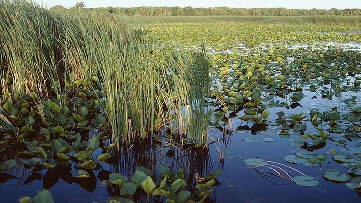 Florida's Everglades: The River of Grass