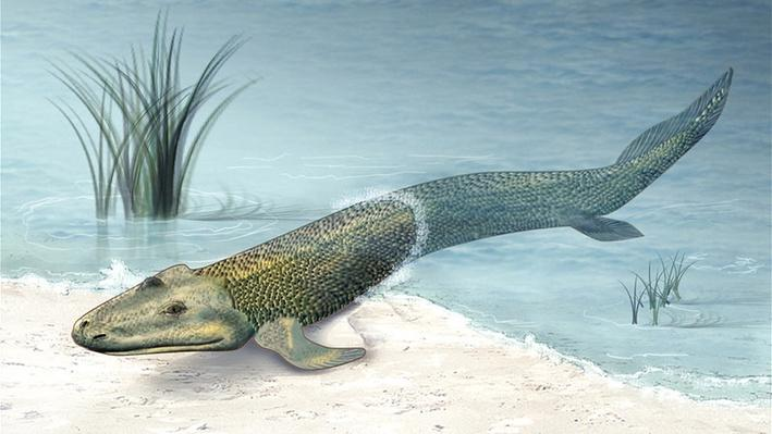 Tiktaalik: A Fish Out of Water