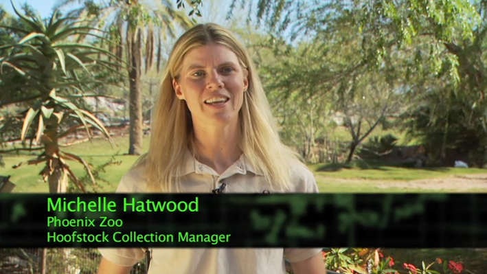 Real-Life Math | Zoo Keeper, Hoofstock