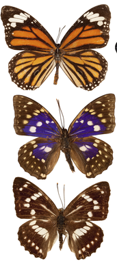 Butterflies and Beetles | Clipart