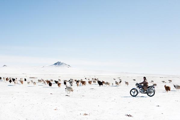 Herding Animals by Motorbike | Global Oneness Project