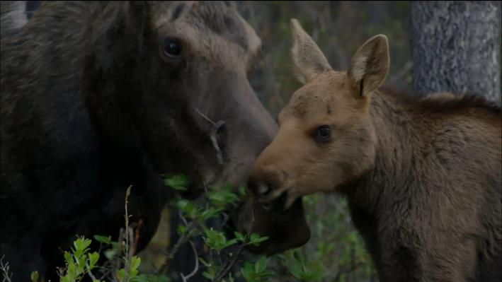 Moose Teach
