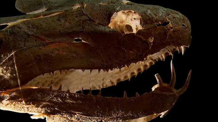 Devonian Fish Fossils