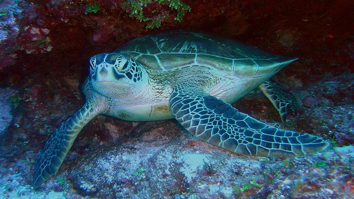 Endangered Sea Turtles | Ocean Today