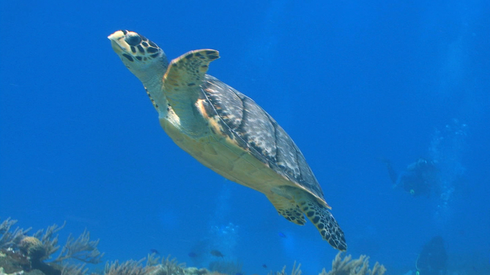 The Endangered Species Act | Ocean Today