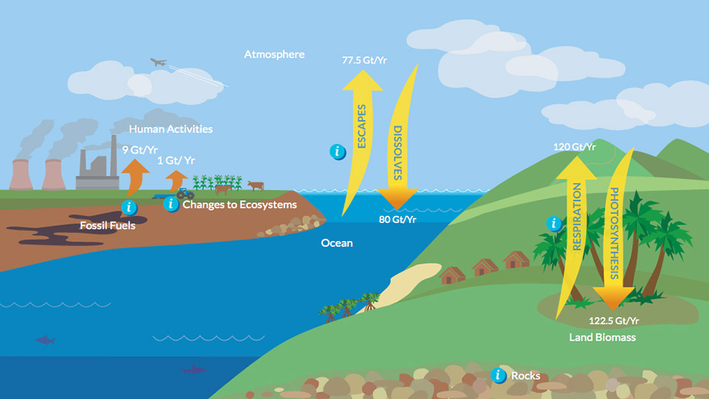 Carbon Dioxide and the Carbon Cycle