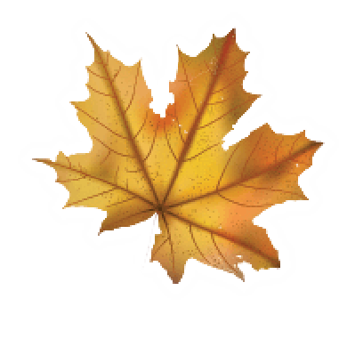 Maple Leaf | Clipart