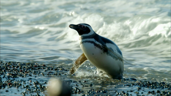 Matter and Energy in Penguins' Aquatic Ecosystem
