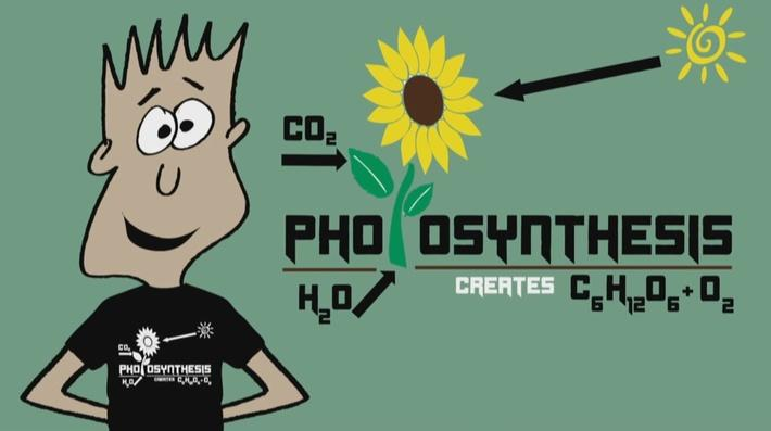 Photosynthesis: Plants are Special | Mr. C: Math and Science