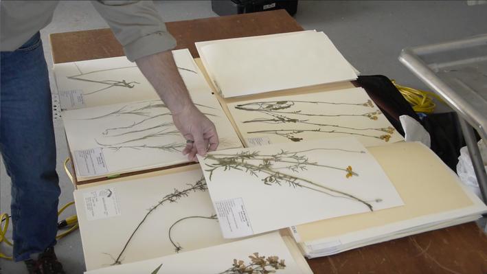 Create an Herbarium Using Plant Presses