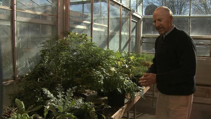 Career Profile: Weed Scientist | Bob Hatzler