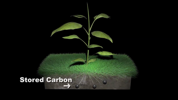 Out of the Air - Into the Soil: Land Practices That Reduce Atmospheric Carbon Levels - What is Terrestrial CO2 Sequestration?