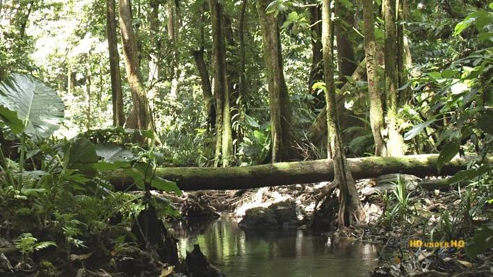 Conserving a Unique Ecosystem in Micronesia | Micronesia Conservation Trust