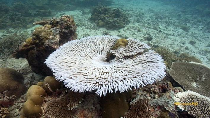Micronesia's Changing Climate | Sustaining Healthy Coral Reefs