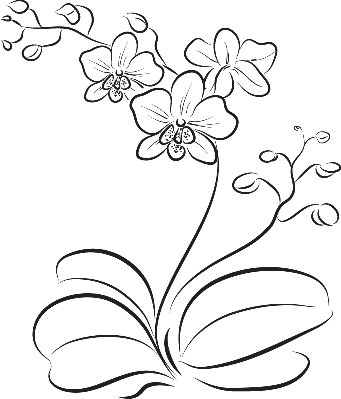 Orchid | Clipart