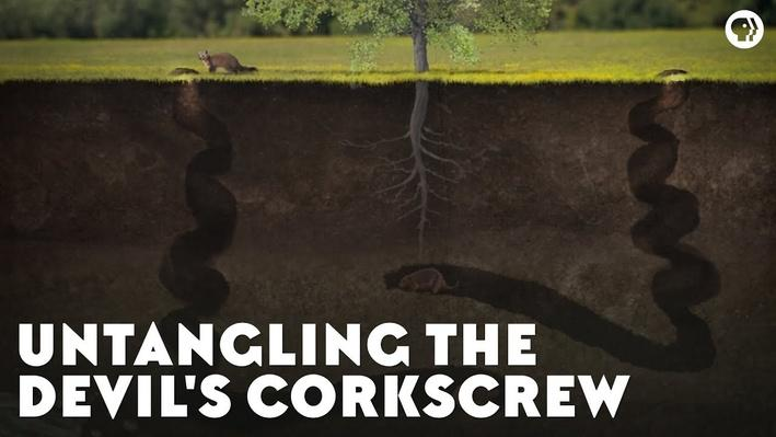 Untangling the Devil's Corkscrew | Eons