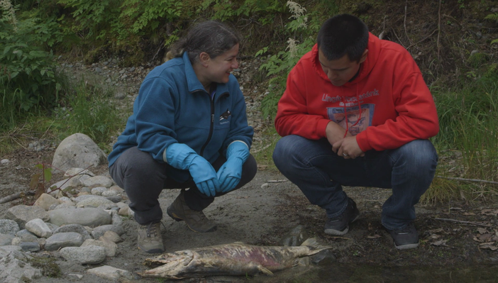 Observing Salmon Structures
