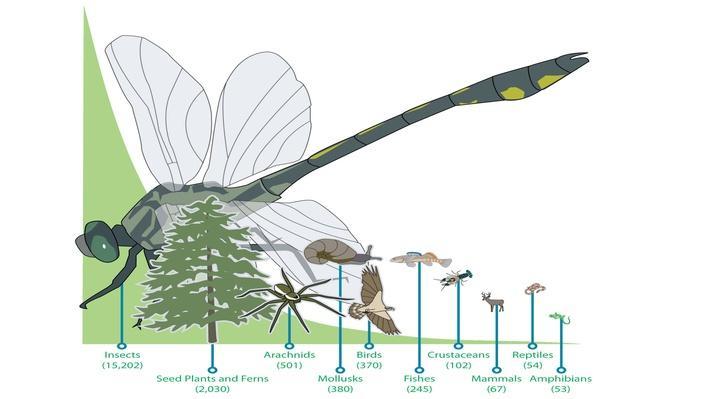 Select Species Groups of Kentucky
