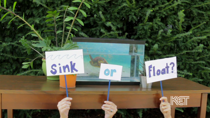 Sink or Float? | Everyday Learning
