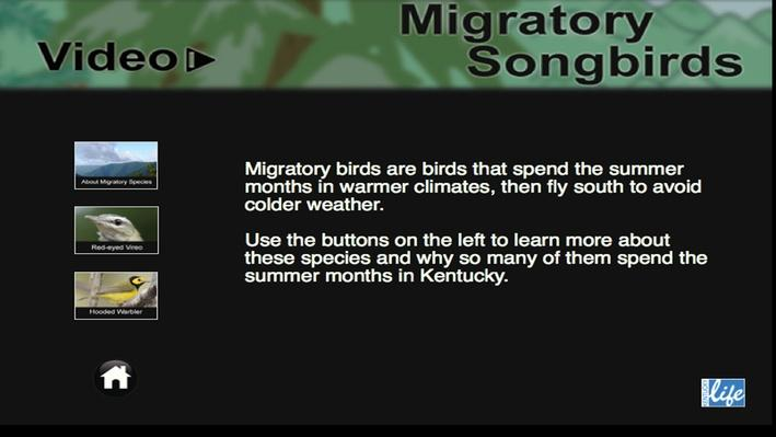Migratory Songbirds