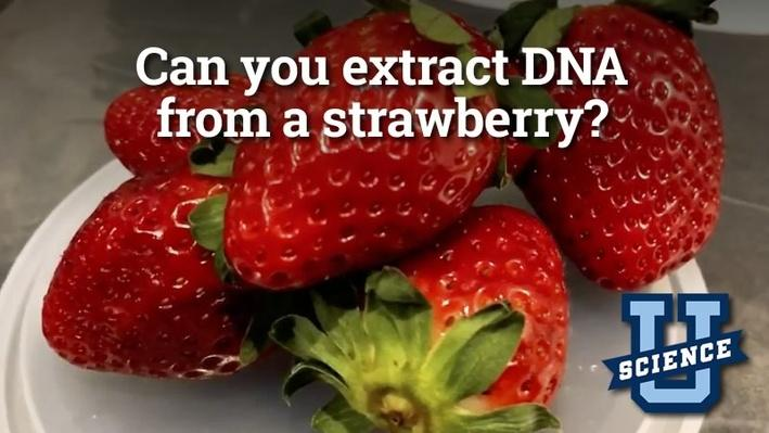 Can You Extract DNA from a Strawberry? | Science-U