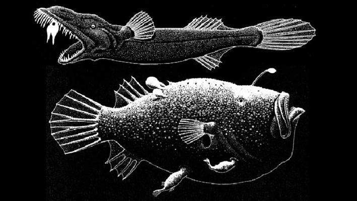 Deep-Sea Bestiary