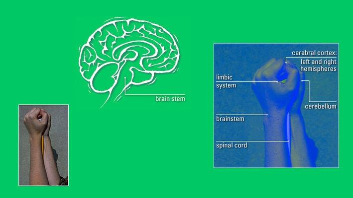 Brain Geography