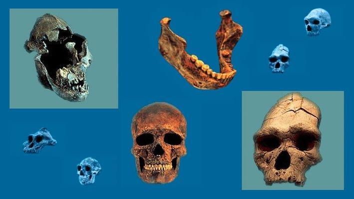 Origins of Humankind