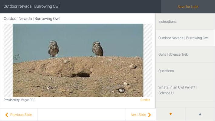Outdoor Nevada | Burrowing Owl