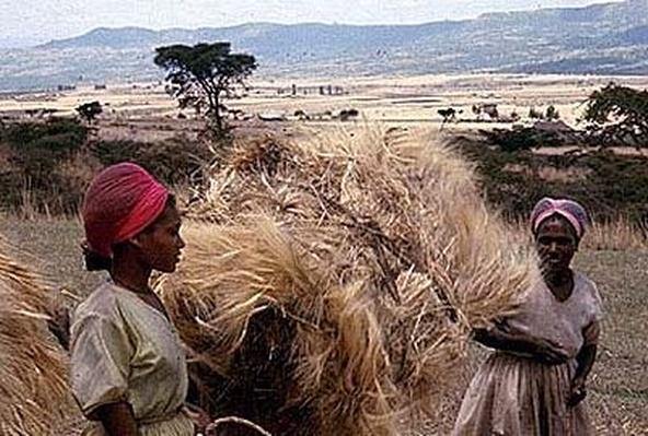 Africa | Teacher Tools: Exploring African Culture