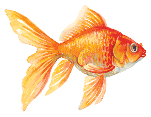 Goldfish | Clipart