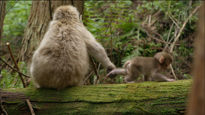 Snow Monkey Nursery