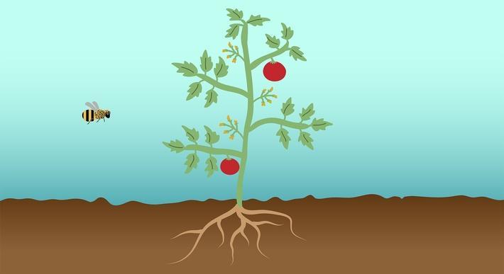 Think Garden: Plant Structure