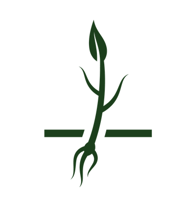 Tree Growing: Growth Life Cycle Icon Set   Clipart