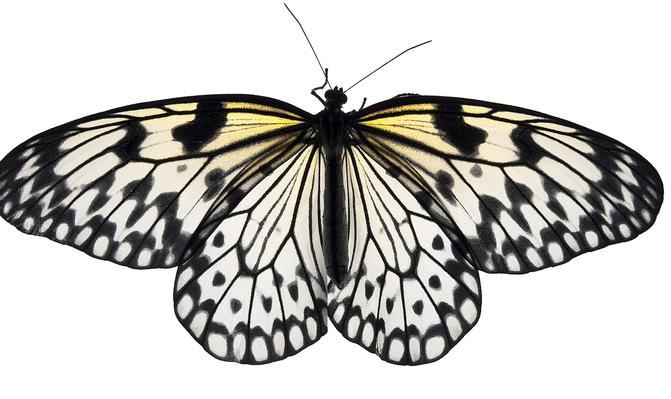 Butterflies and Beetles | Clipart