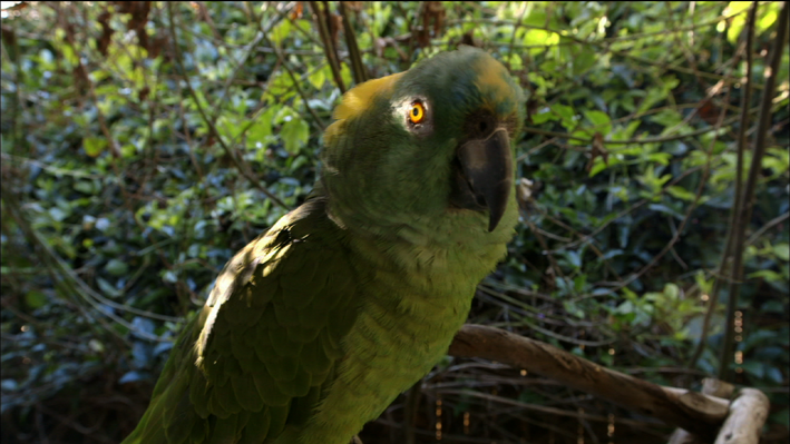 Unwanted Parrots