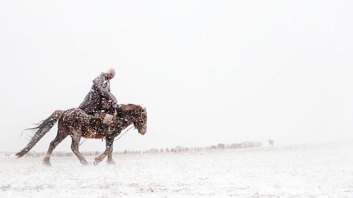 Mongolian Herder Gathers Sheep | Global Oneness Project