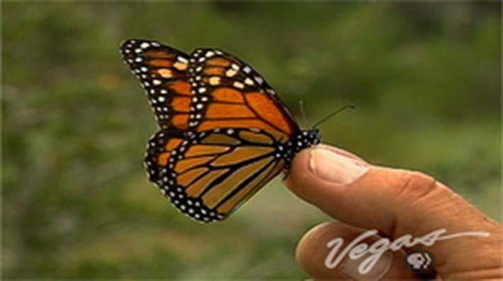 Outdoor Nevada | Butterflies
