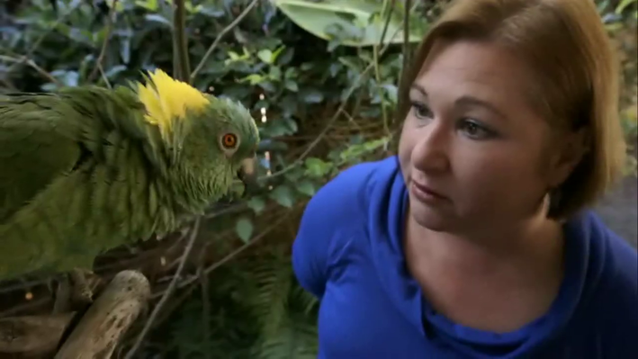 Meet the Parrots | Parrot Confidential: Chapter 1
