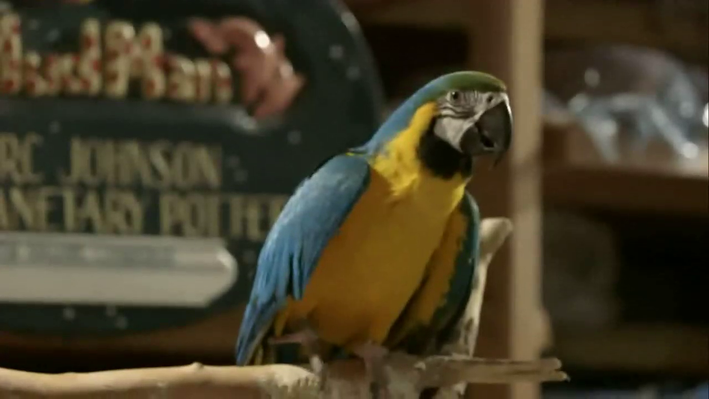 From the Wild to Our Homes  Parrot Confidential: Chapter 2