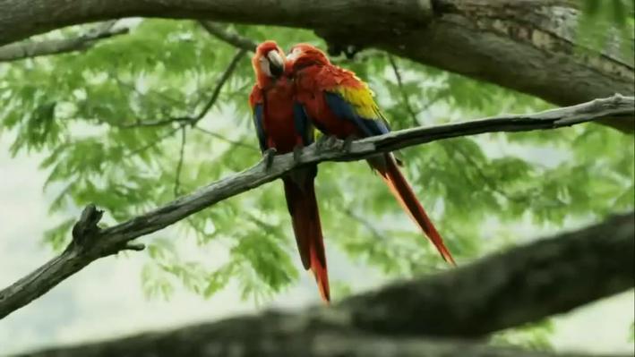 Parrot Confidential | Nature