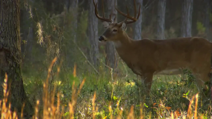 White-Tailed Deer Behavior | The Private Life of Deer: Chapter 3