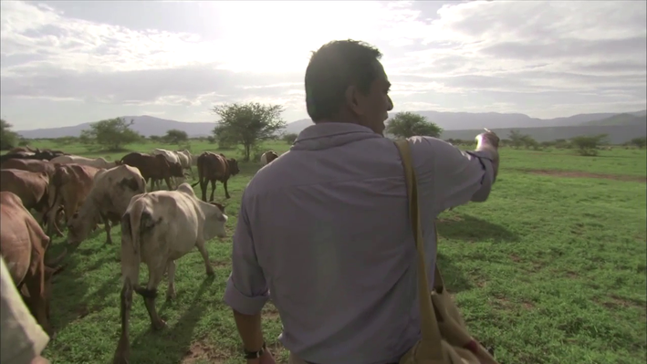 Cattle in Kenya | EARTH A New Wild