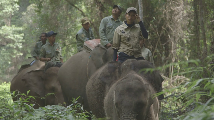 Mahouts and Elephants | EARTH A New Wild