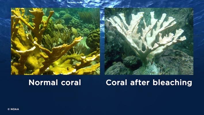 Virtual Field Trip Video: Coral | Nature Works Everywhere