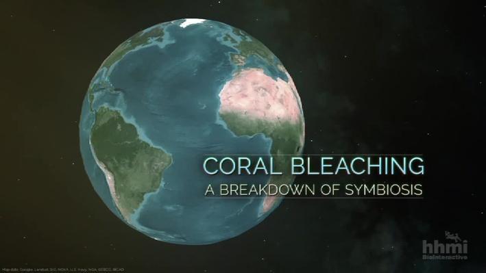 Coral Bleaching | HHMI BioInteractive