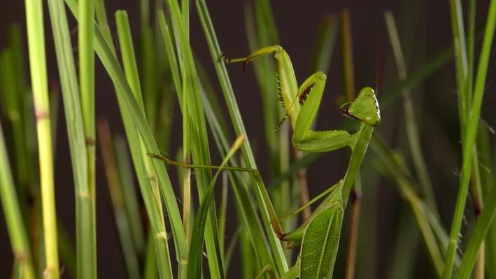 Biodiversity | Gorongosa Park: Rebirth of Paradise