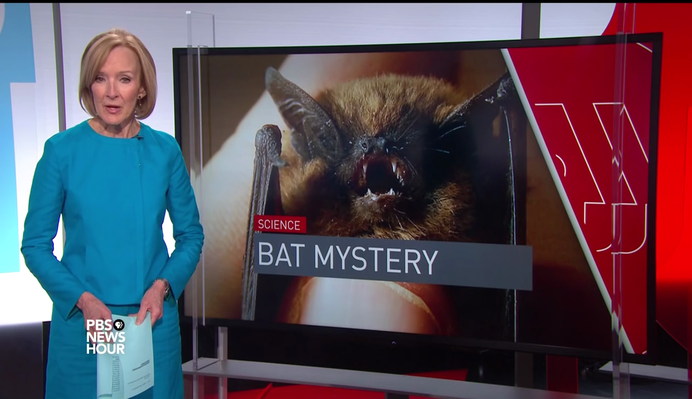 Scientists Try to Understand Disease Killing Millions of U.S. Bats | PBS NewsHour