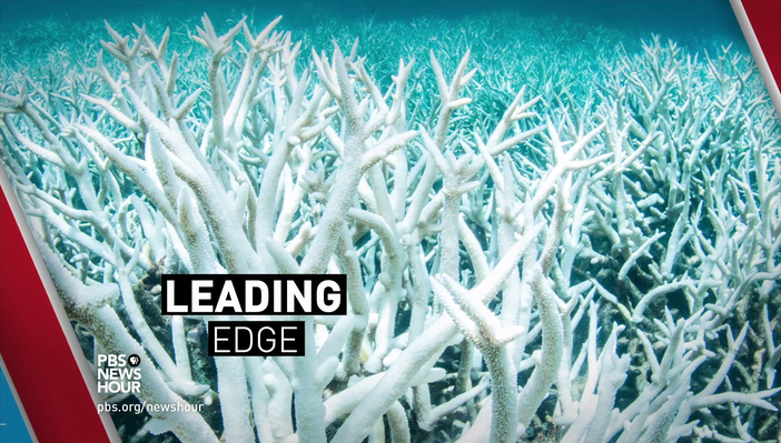 Rising Ocean Temperatures Threaten World's Coral Reefs | PBS NewsHour