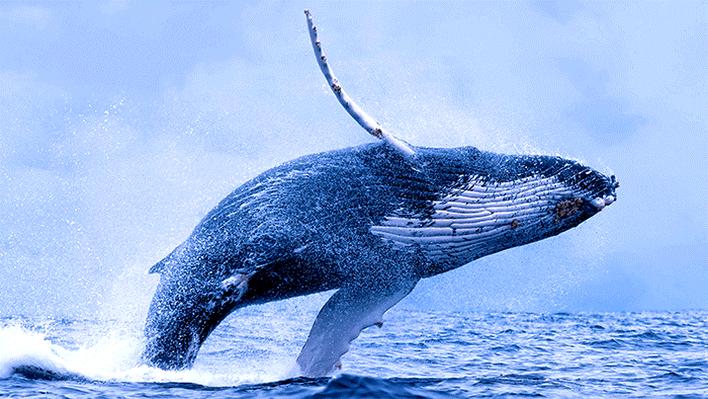 Digital Resources to Explore the Deep Blue Depths